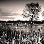������, ������: Frozen lake