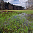 Swamp in the spring — Stock Photo