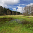 Royalty-Free Stock Photo: Swamp in the spring