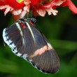 Buterfly on a orchid - Stockfoto