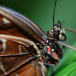 Butterfly detail - Stockfoto