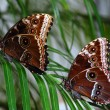 Two butterflies on a branch - Stockfoto