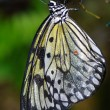 Wet butterfly - Stockfoto