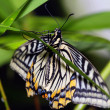 Tropical butterfly - Stockfoto