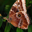 Two butterflies on a branch — Stock Photo