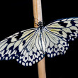 White butterfly - Stockfoto