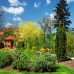 Spring garden — Stock Photo #6807651