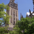 View at Giralda Tower — Stockfoto