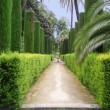 Park in Alhambra — Stock Photo #6807834