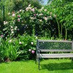 Garden and bench — Stock Photo #6808207