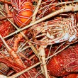 Lobster background - Stock Photo