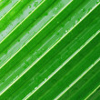 Palm leaf — Foto de Stock