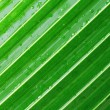 Palm leaf — Stockfoto