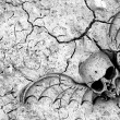 Death in soil - Stock Photo