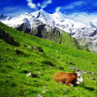 Alps and cows - Stock Photo