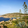 Sardinia shore and agave — Stock Photo