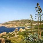Sardinia shore and agave — Stock Photo