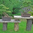 Foto Stock: Two bonsai