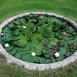 Garden pond with water lotus — Stock Photo