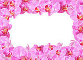 Orchid frame — Stock Photo