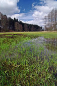 Swamp in the spring — Stock Photo