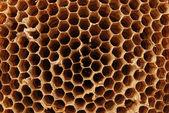 Hornet nest — Stock Photo