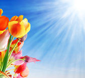 Tulips and sun — Stock Photo