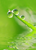 Dew and water — Stock Photo