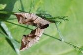 Papillon sur une tige — Photo