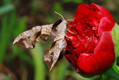 Moth on a flower — Stock Photo