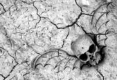 Death in soil — Stock Photo