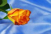 Rose on satin — Stock Photo