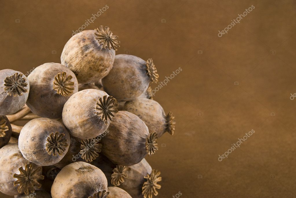 Poppy heads detail - pods with poppy grain isolated on brown — Stock Photo #6807644
