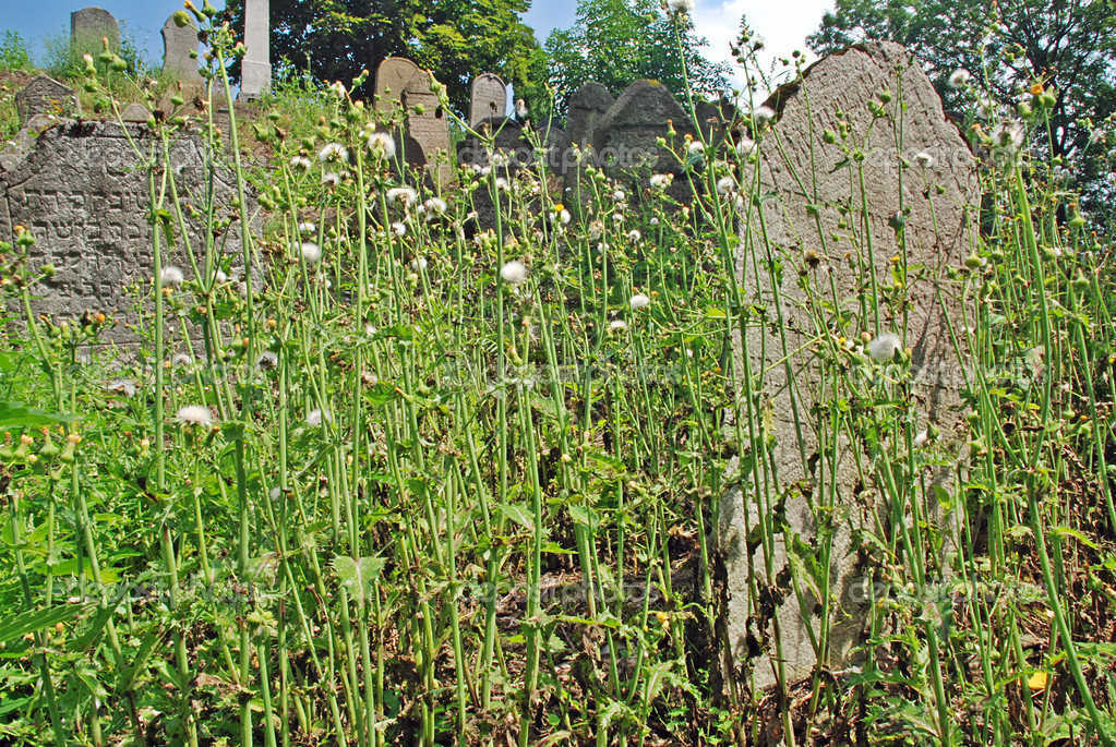 Old cemetery - graves hidden in the grass — Stok fotoğraf #6809661