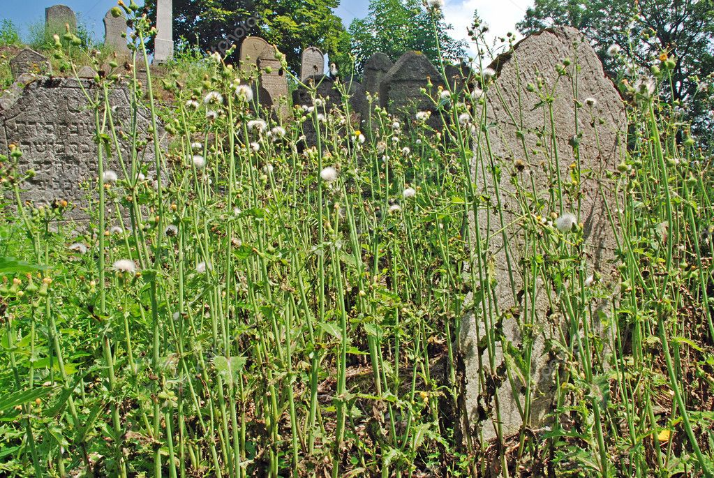 Old cemetery - graves hidden in the grass  Stock fotografie #6809661