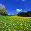 spring landscape — Stock Photo #6810041