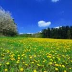 Spring landscape — Stock Photo