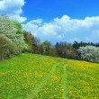 spring landscape — Stock Photo #6810073