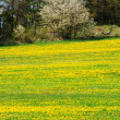 Spring landscape — Stock Photo #6810087