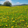 Spring landscape — Stock Photo #6810106