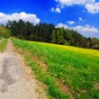 Spring landscape — Stock Photo #6810110