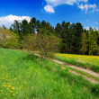 Spring landscape — Stock Photo #6810113
