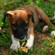 Puppy — Stock Photo #6810470