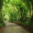 Green tunnel — Stock Photo #6810603
