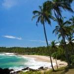 Tropical paradise — Stock Photo #6811588