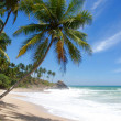 Tropical paradise — Stock Photo #6811607