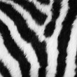 Zebra skin — Stock Photo #6811977