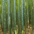 Bamboo forest — Stock Photo #6812147