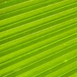 Palm leaf — Foto Stock