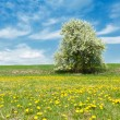 Spring landscape — Stock Photo #6812277